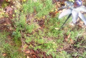 Winter Herb Garden!