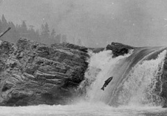 Kettle Falls postcard, courtesy nwcouncil.org