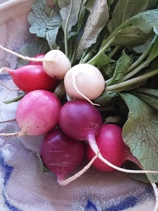 Easter Egg Radishes
