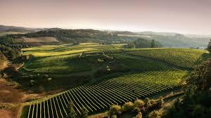 willamette-valley-vine